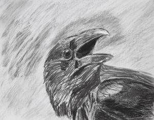 grand corbeau - Eric Mourniac