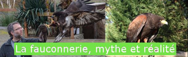 Exposition regard sur la fauconnerie