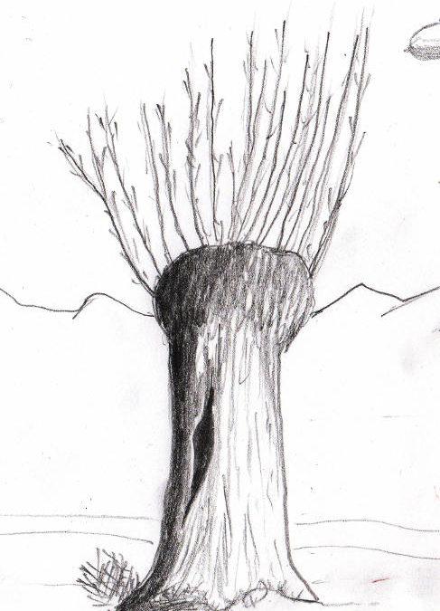 La bonne trogne des arbres têtards …