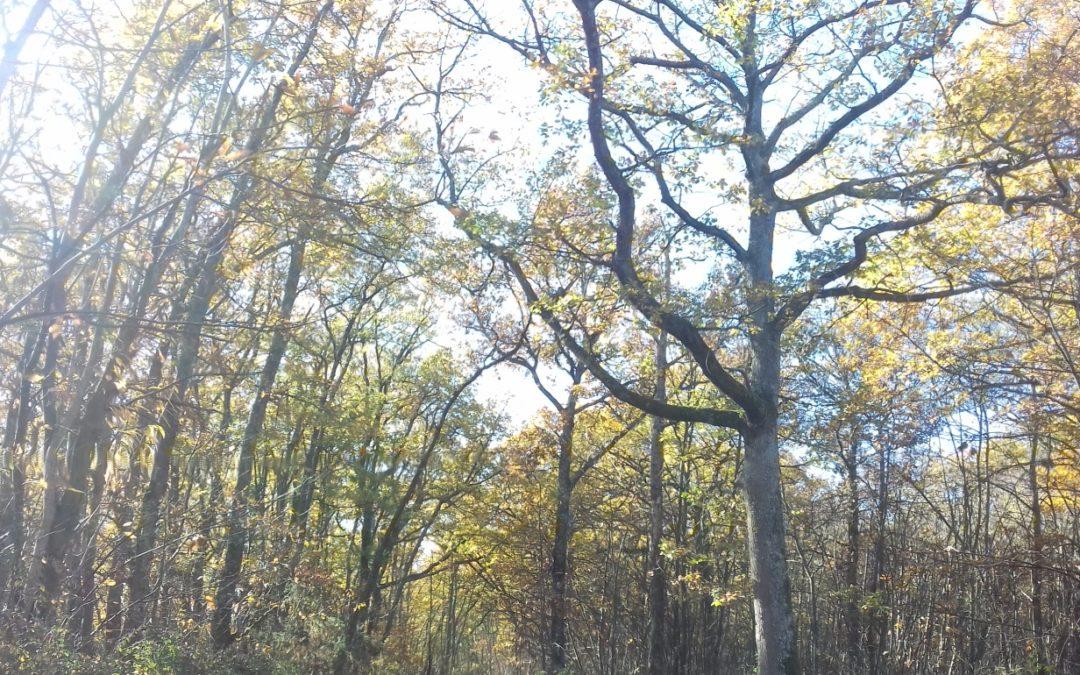 Sylvothérapie / Bain de forêt : Comment faire en pratique ?