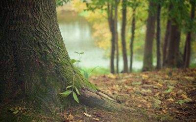 Sylvothérapie / Bain de forêt : Description générale