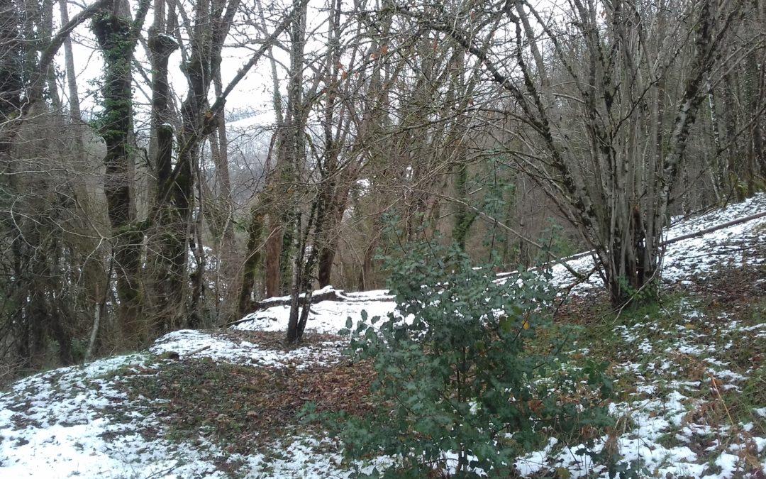 Sylvothérapie / Bain de forêt : Des bénéfices mesurables ?